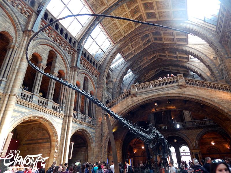 Le Natural History Museum de Londres, gros coup de coeur!